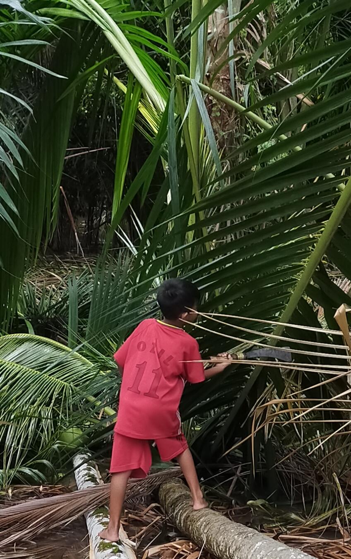 Memetik buah kelapa sambil berjalan di atas pohon