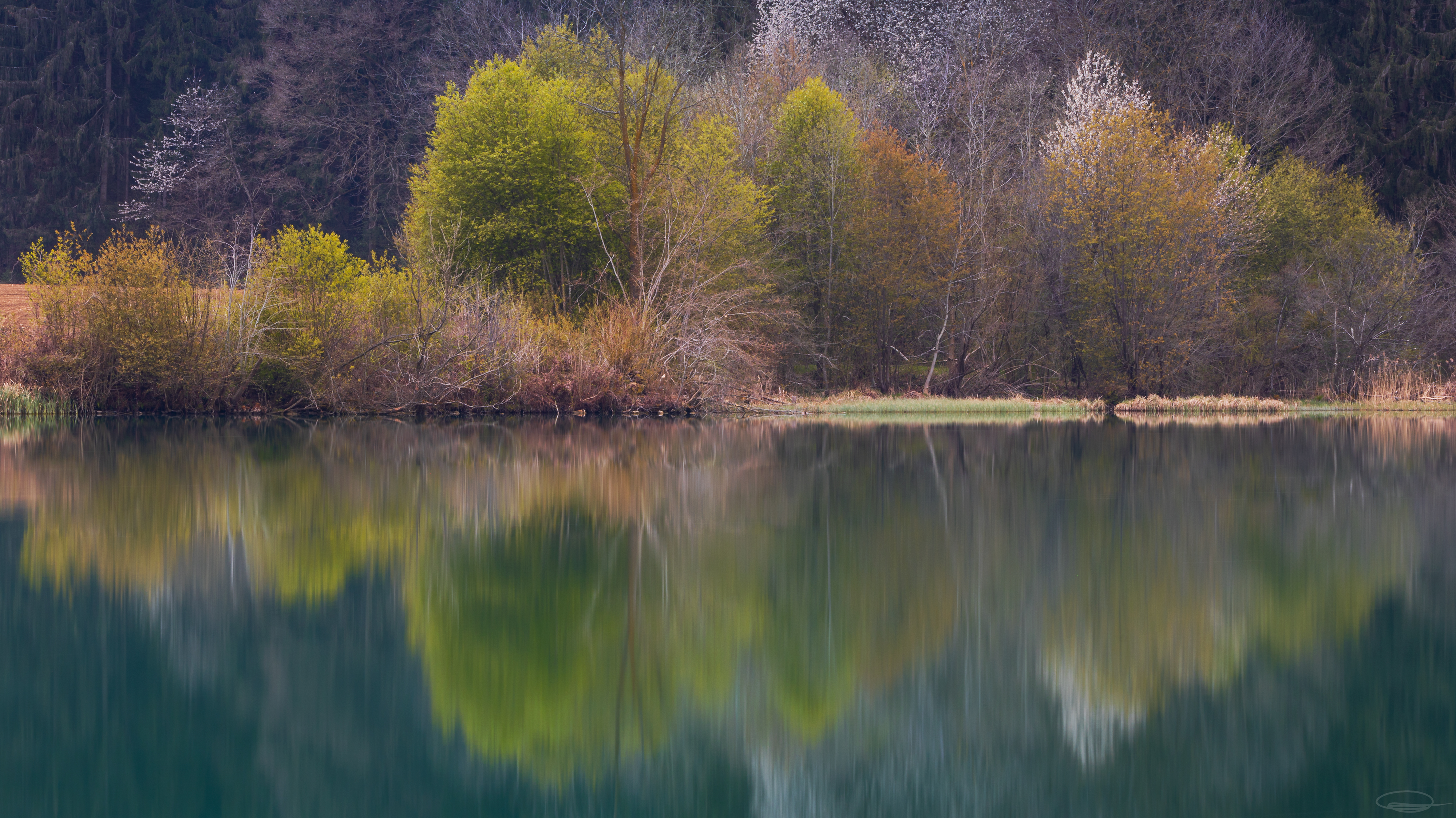 Springtime: New growth on the other side of the River