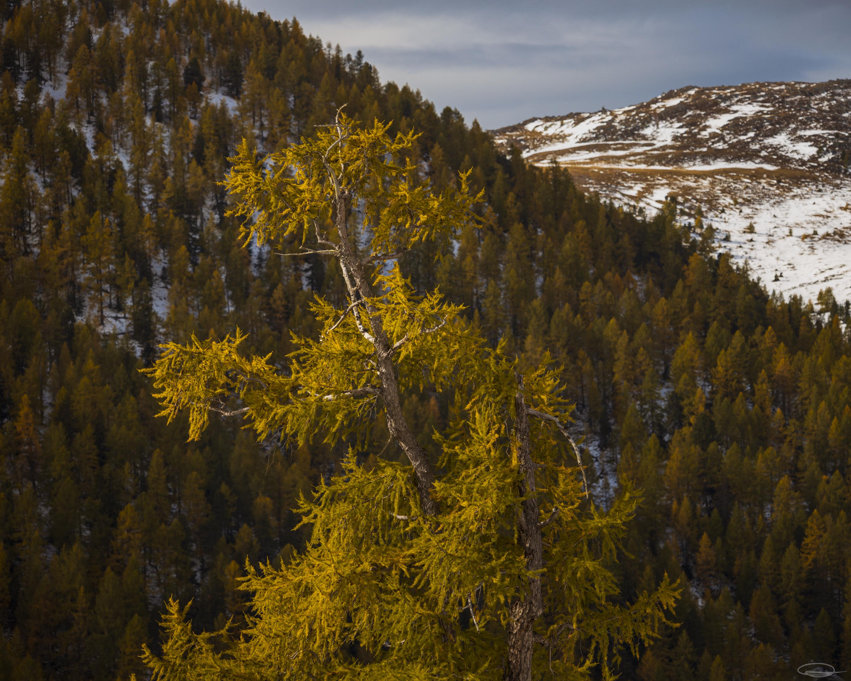 Autumn 2021 - Nock Mountains, Carinthia, Austria