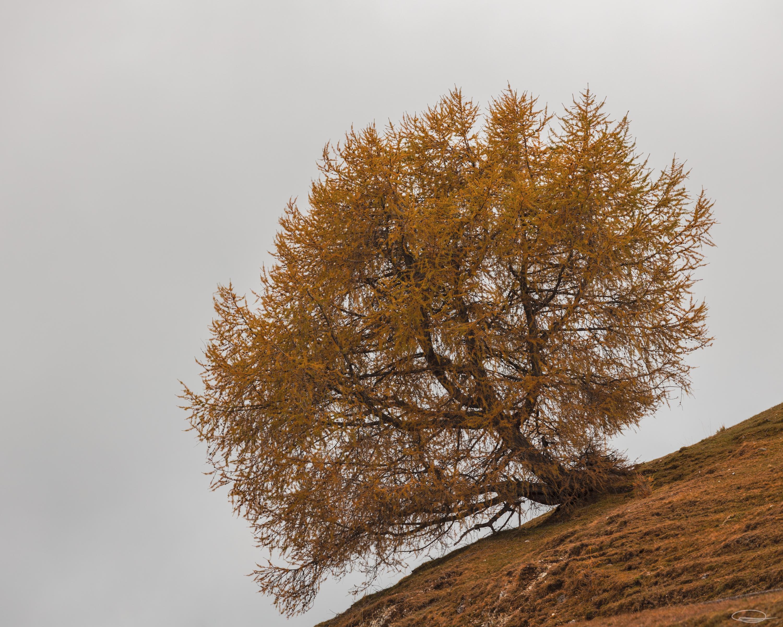 Green vs Autumnal Colors