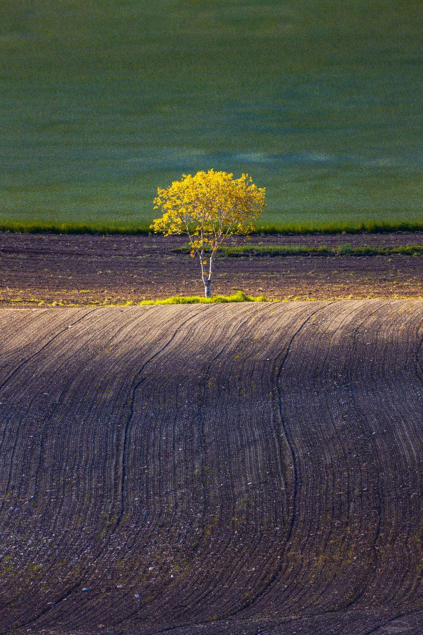 Little Tree in Sunshine on the Field