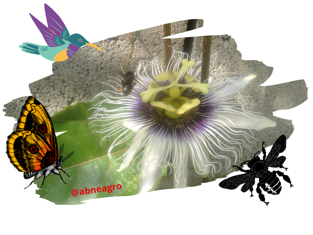 competition among species 4.png
