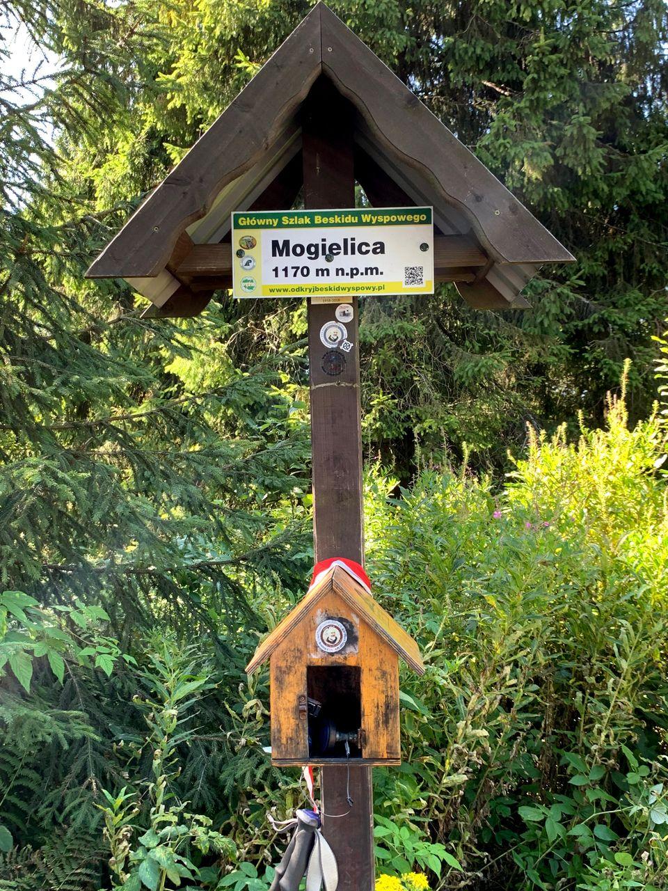Mogielica, 1170m