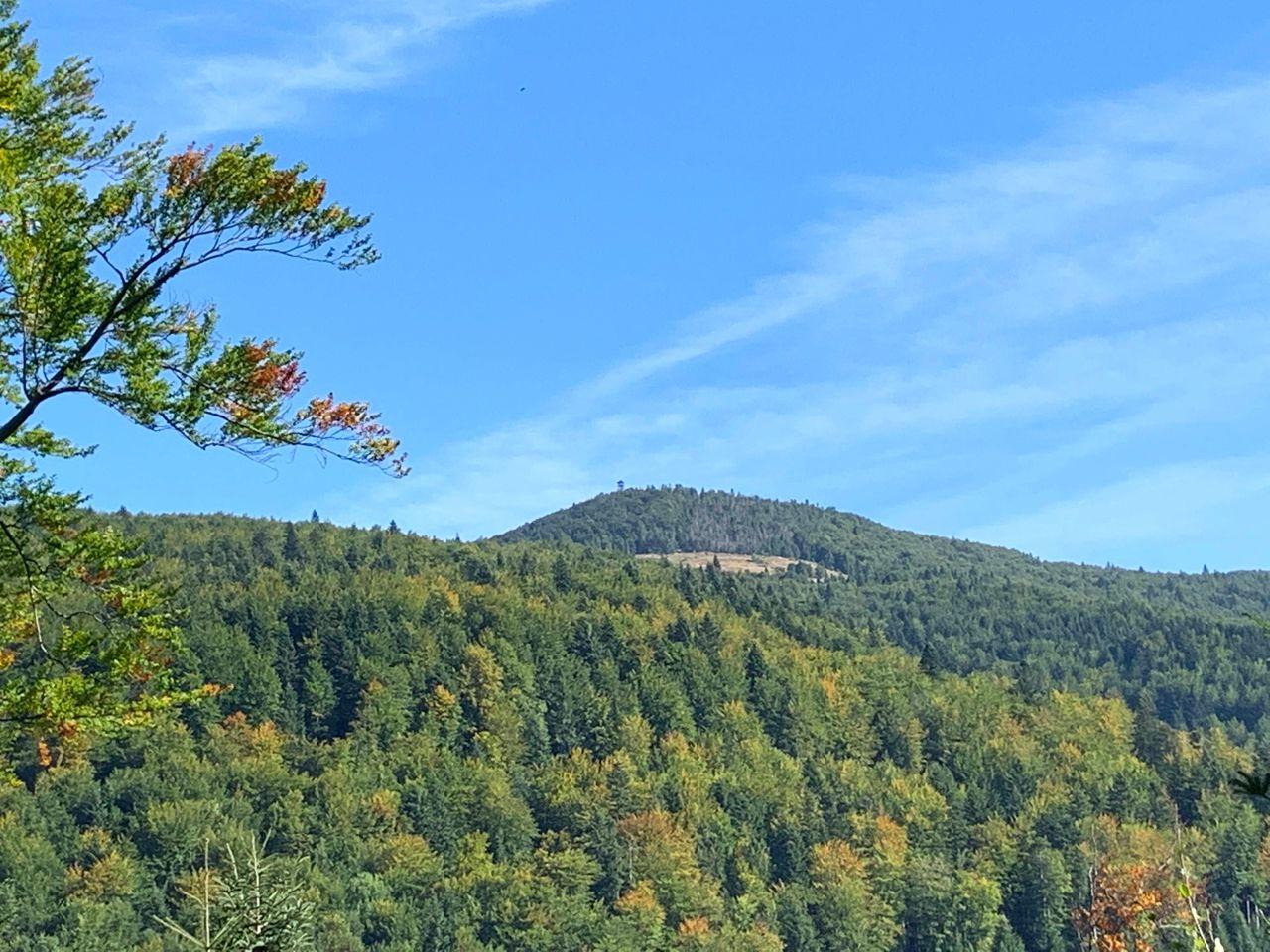Widok na Mogielicę ze szlaku z Szczawy