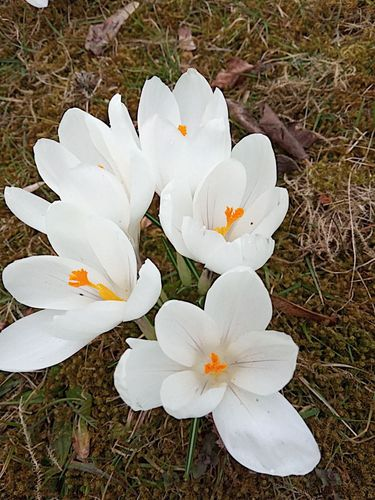 Beautiful white first spring flowers. 🌸
