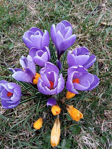 P urple Spring Flowers 🌺