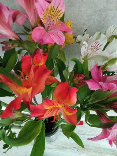 Lovely flowers 💖🌸
