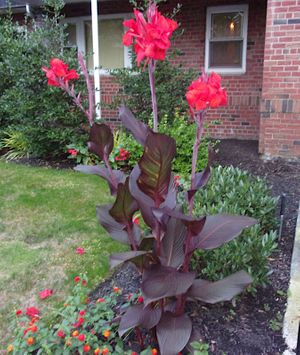 Red-Flowered Plant