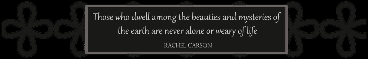 Rachel Carson Quote.png