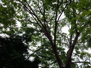 Tree / Arbol
