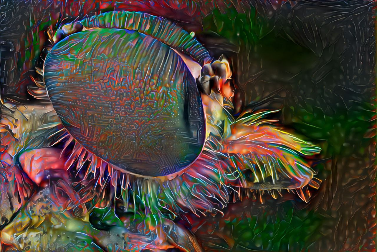 bee-eye-macro-circuit-60-30-smooth-gleam.jpeg
