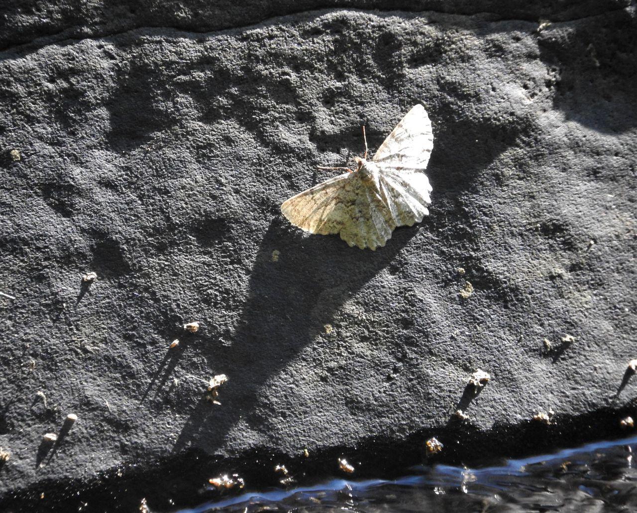bouldersunday8-29-2021-8ok.jpg