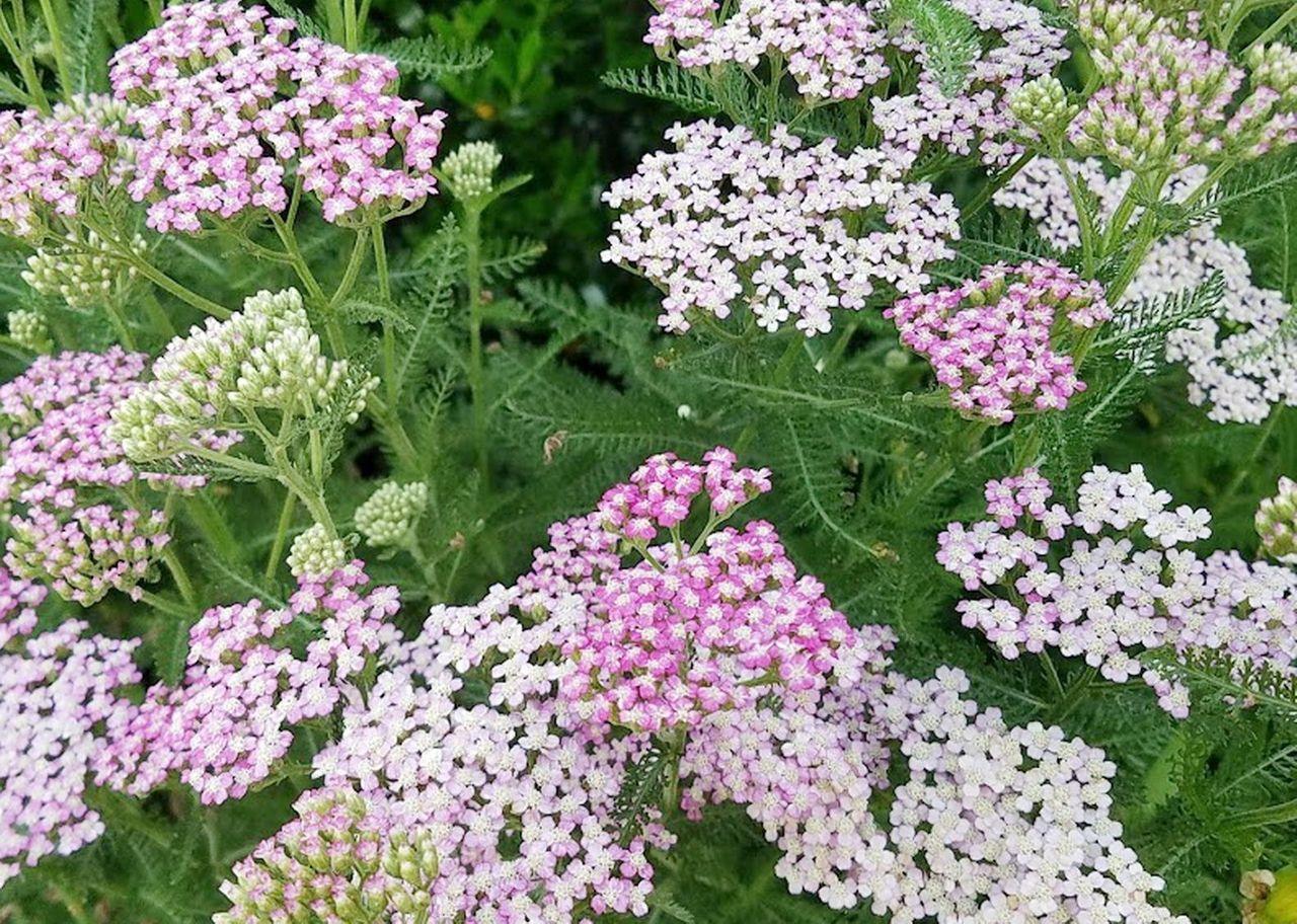 20210606_065004 flowers.jpg
