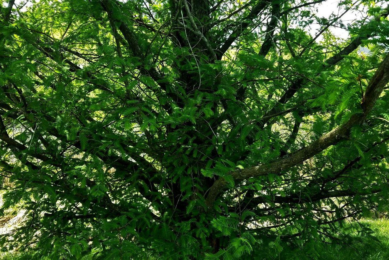 Tree Tuesday.jpg