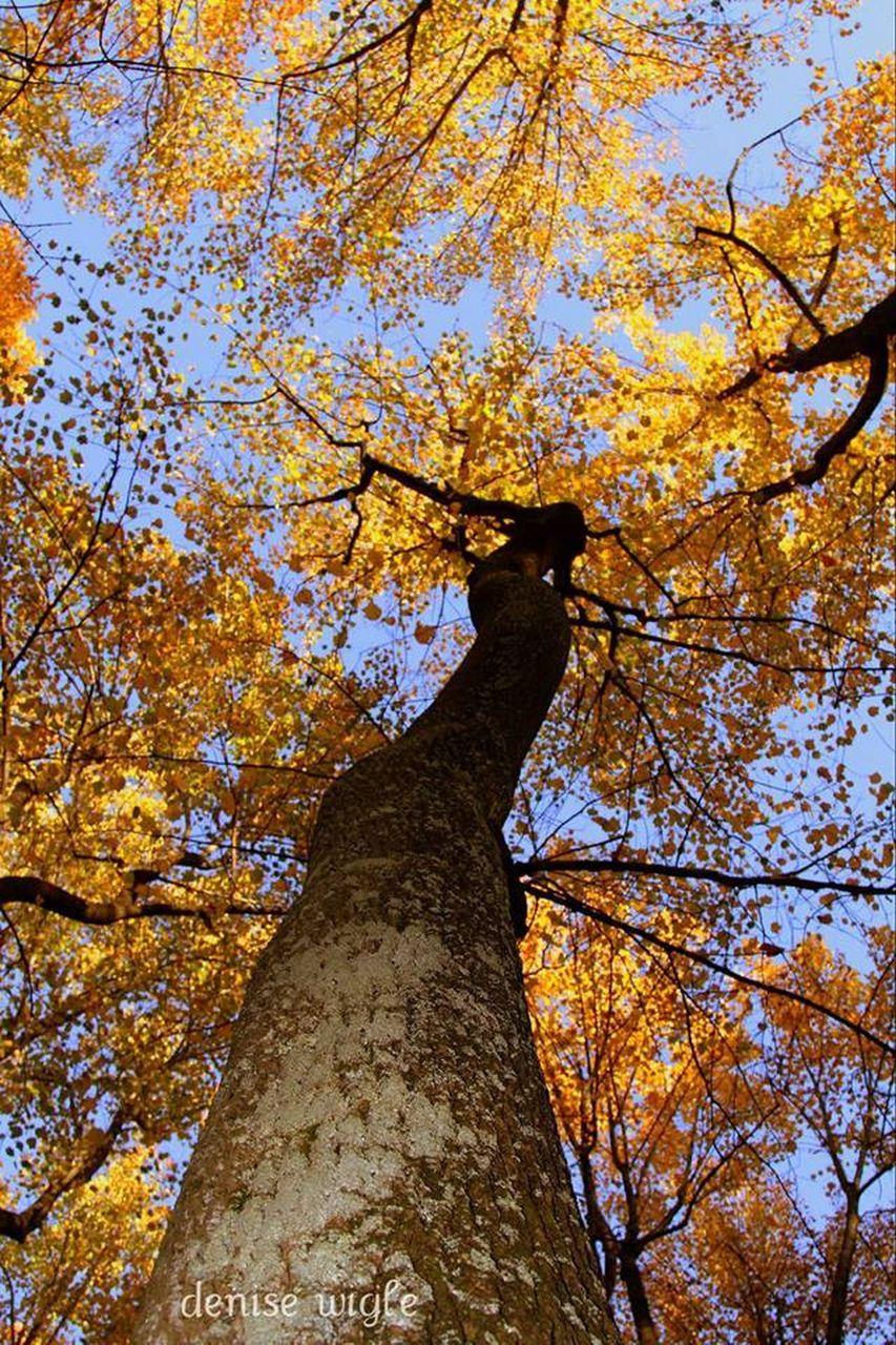 tree if gikd.png