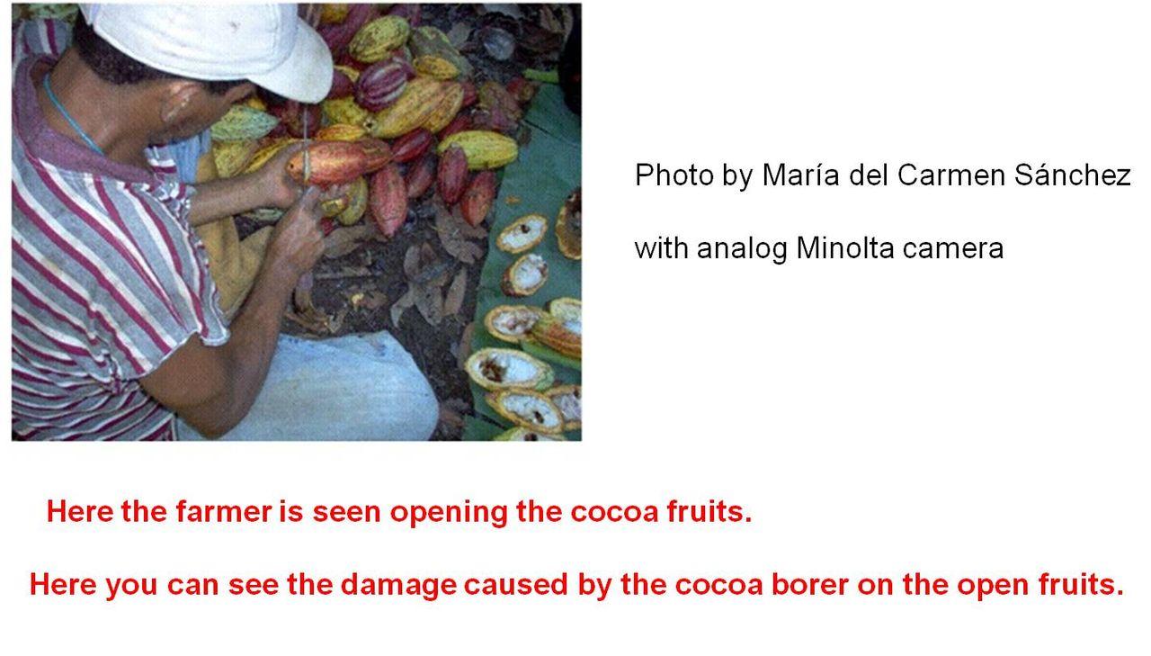 Cacao Ladies.jpg