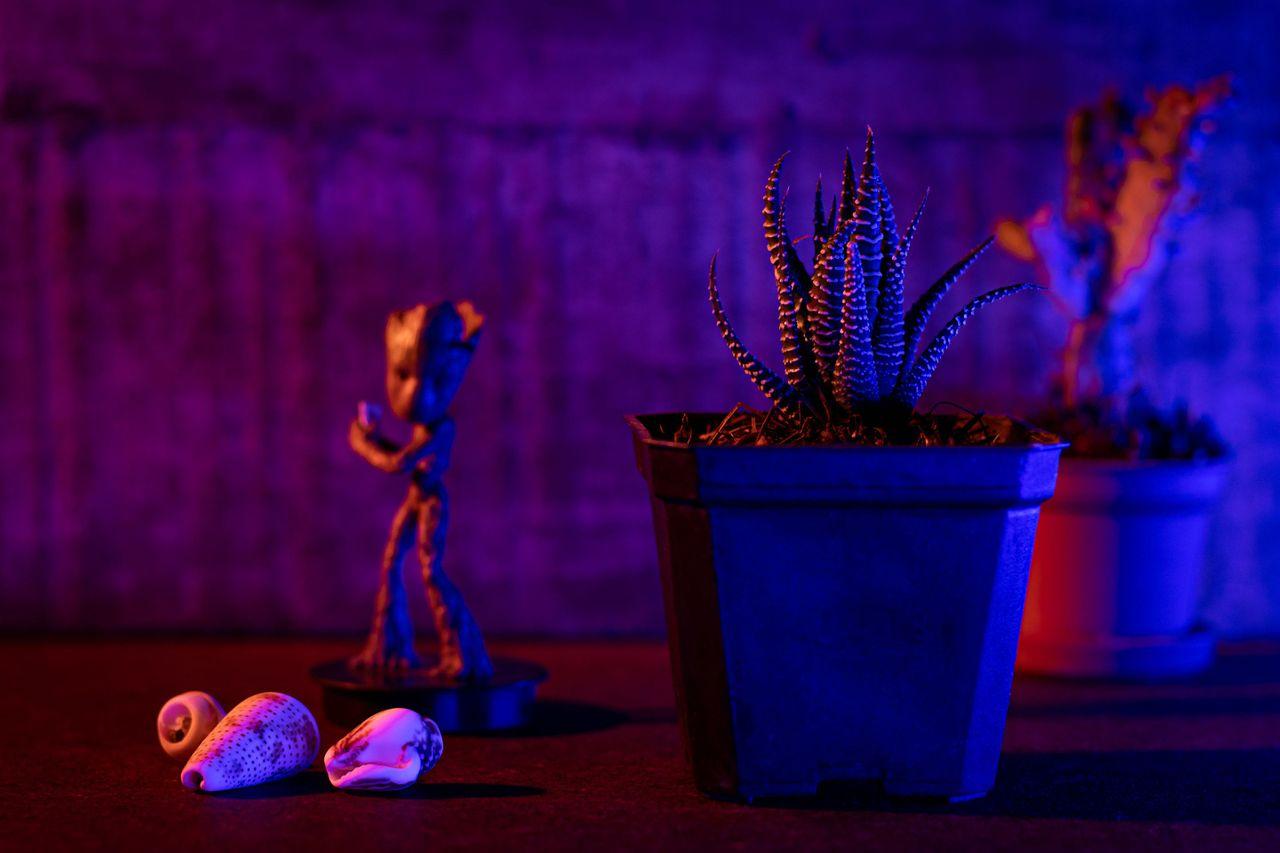 cactus_luz-2.JPG