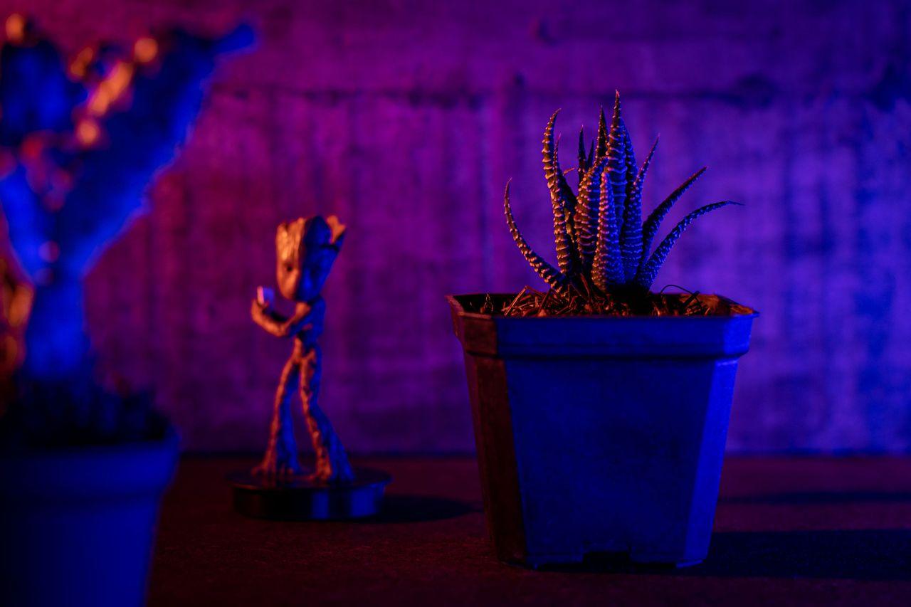 cactus_luz.JPG