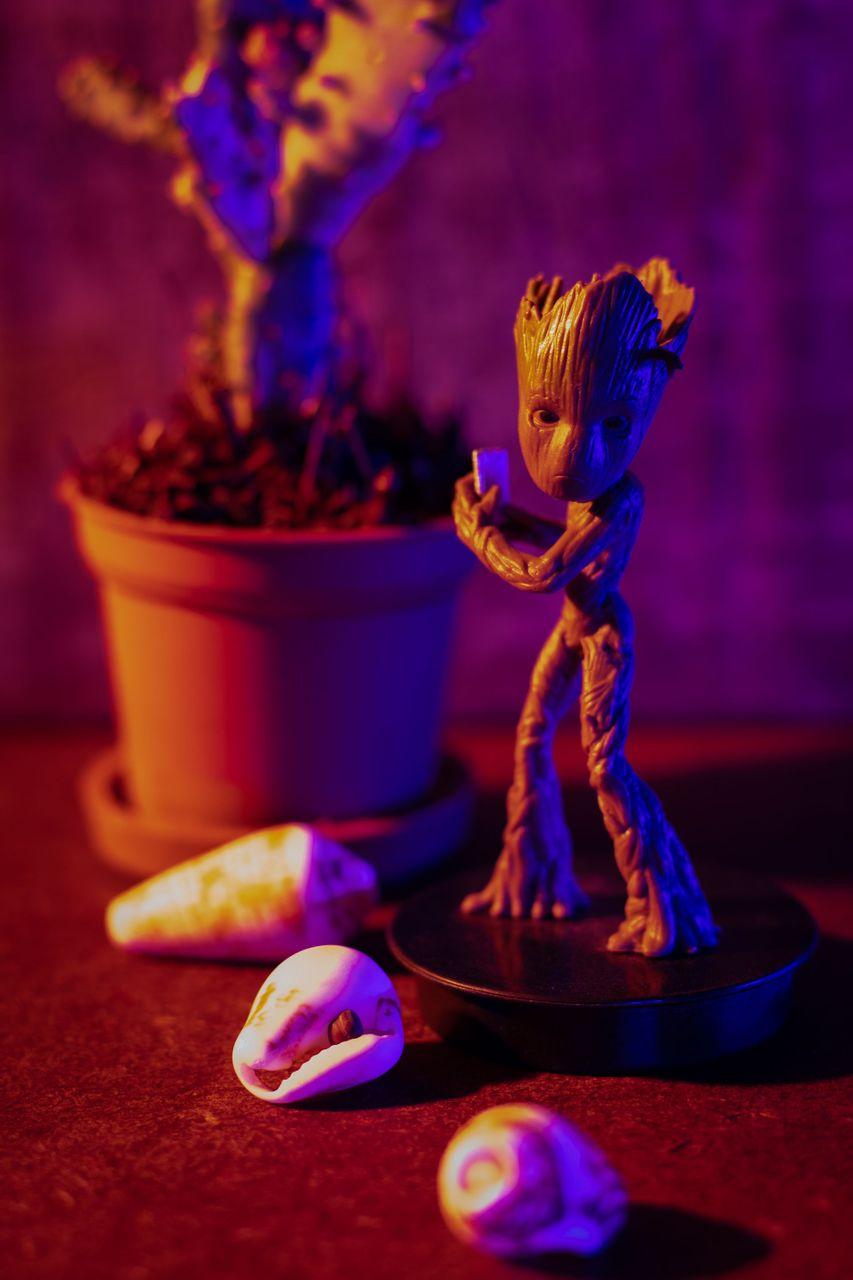cactus_luz-4.JPG