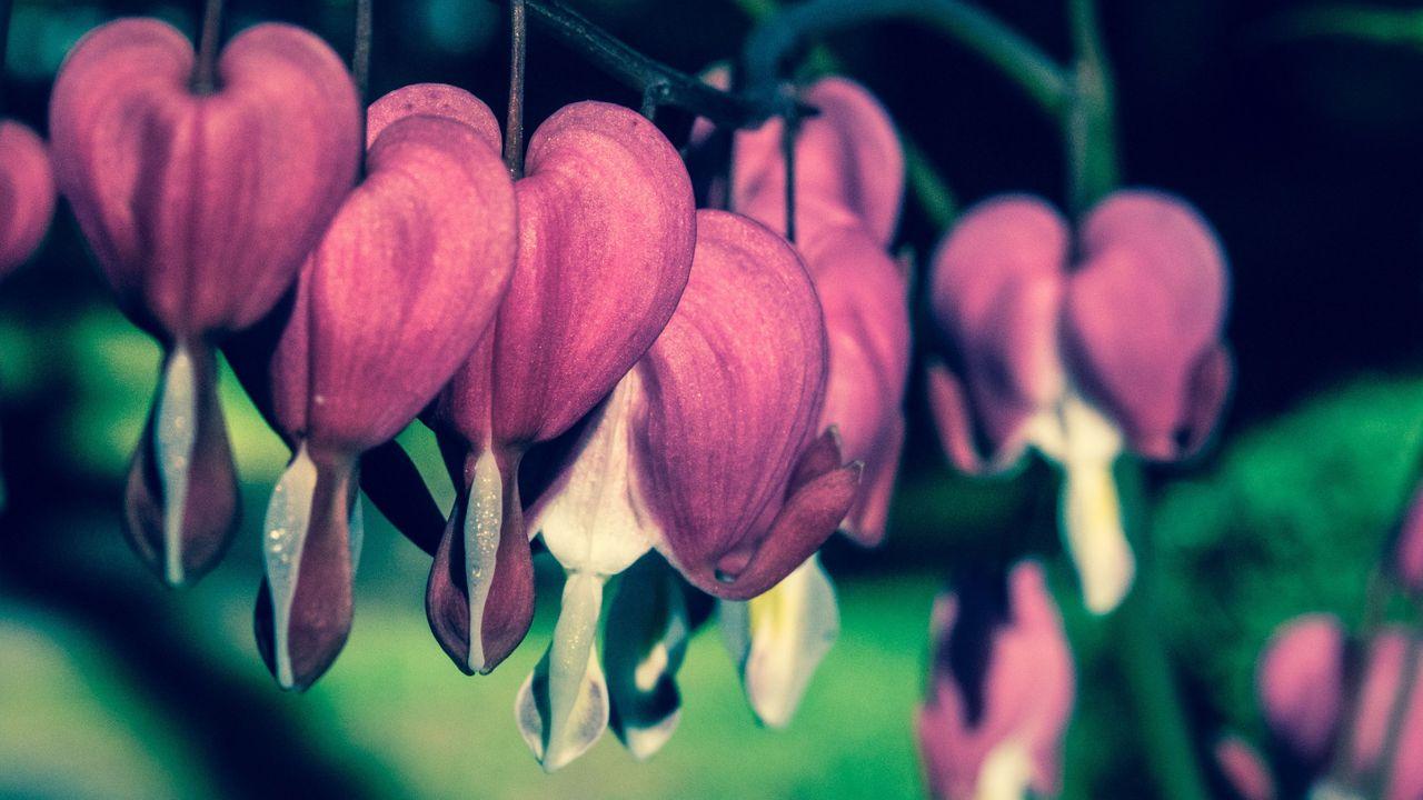flower_hearts.jpg