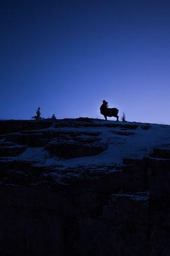 Twilight Bighorn Sheep