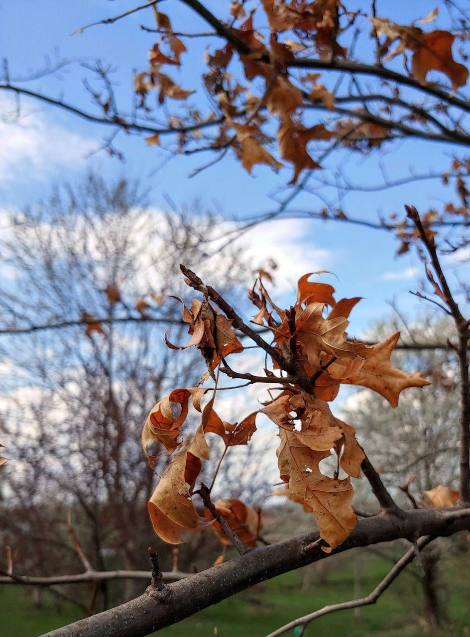 oak_in_spring.jpg