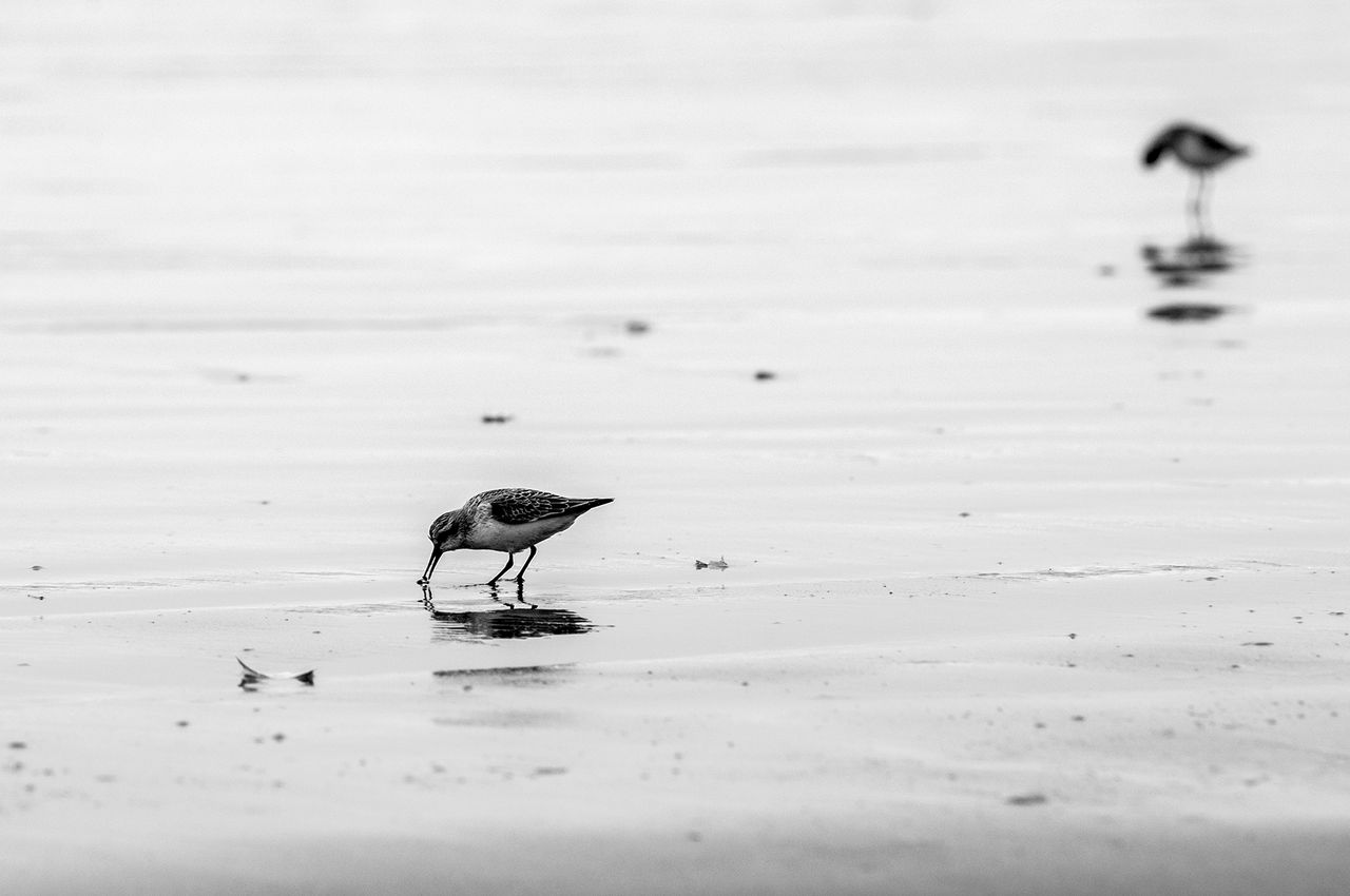 beach_birds_1.jpg