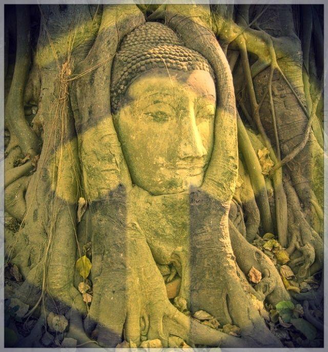 Buddha Tree.jpeg