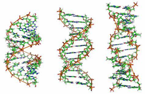 DNA - Stränge