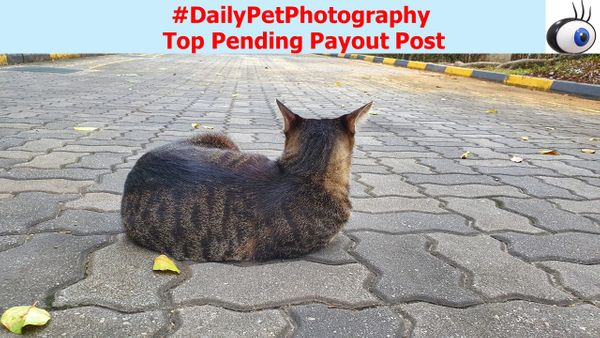 #dailypetphotography Top Pending Payout Post since 20200802
