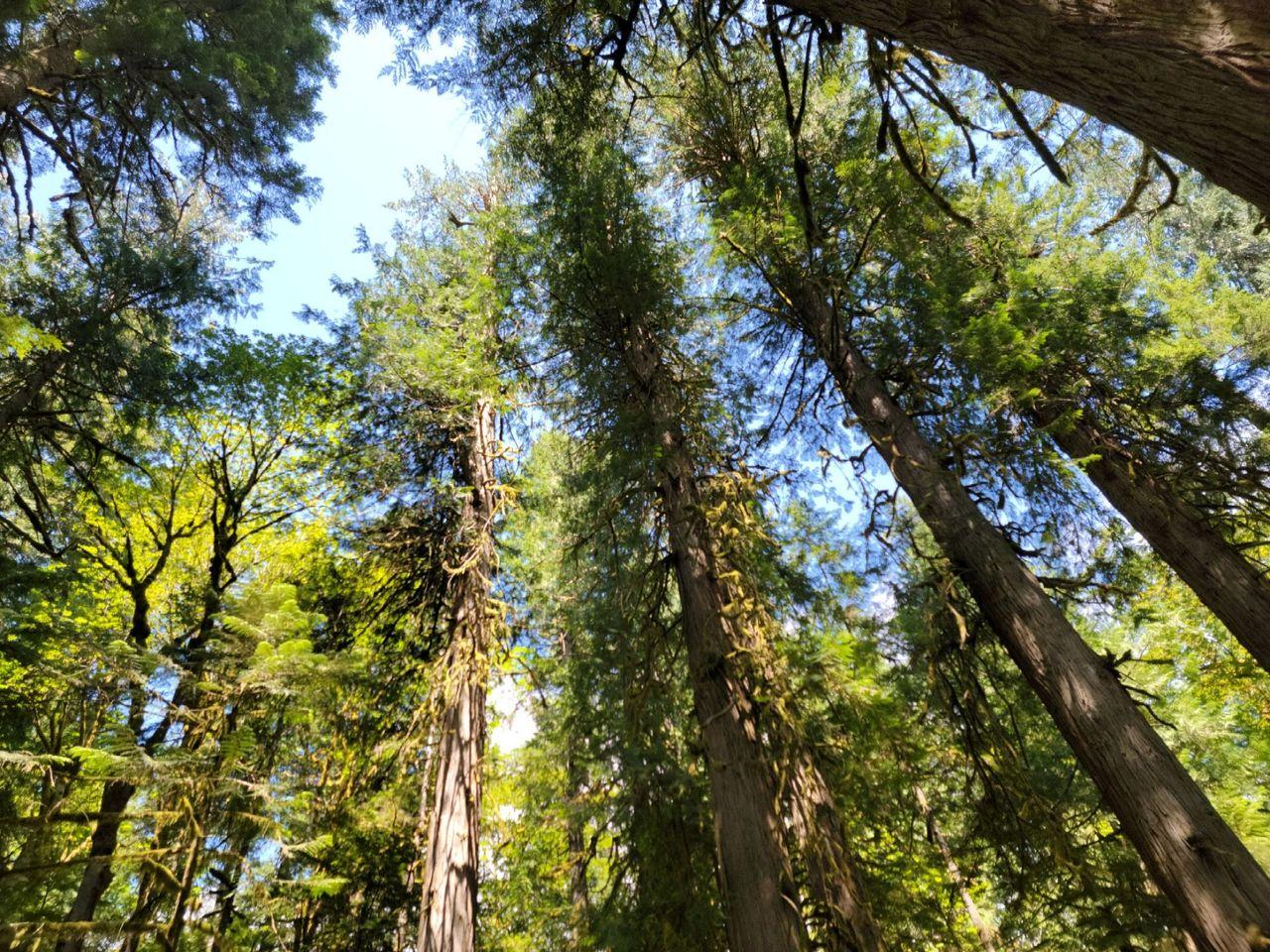 trees looking up.jpg