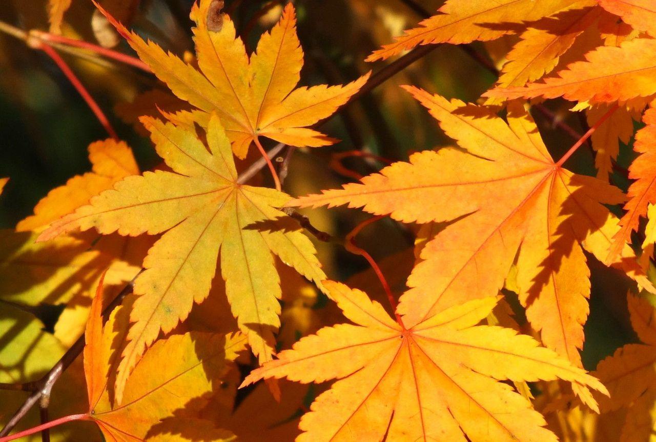 0840-leaves.jpg