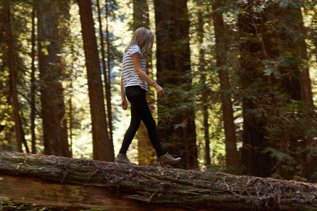 Redwoods022.jpg