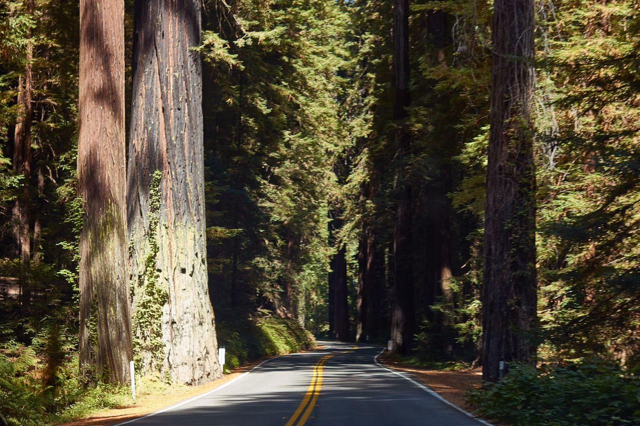 Redwoods025.jpg