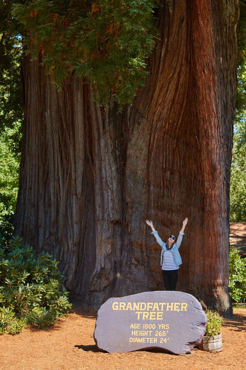 Redwoods013.jpg