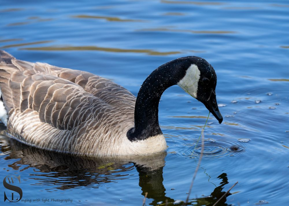 feathered friends-5.jpg