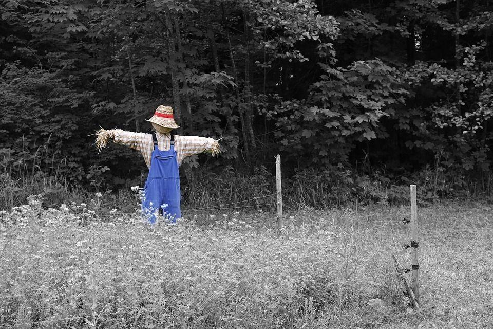 scarecrow-670720_960_720.jpg