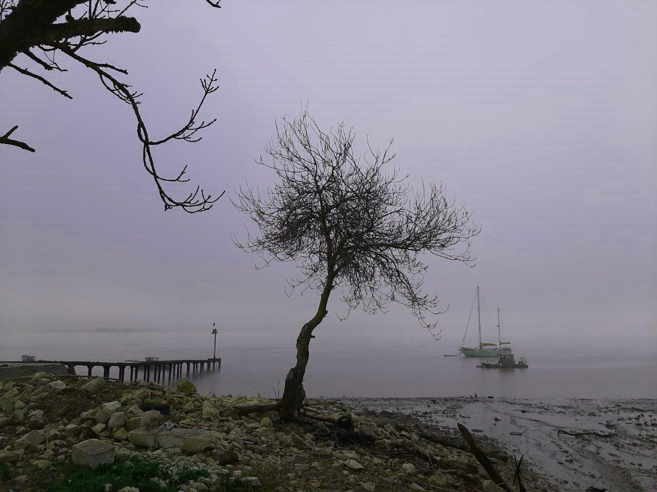 Gironde Baum 12.19.jpg