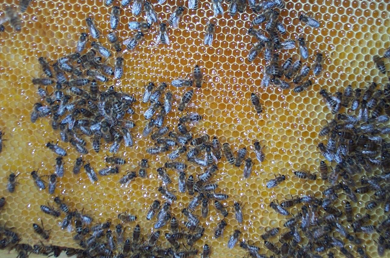 bees5.jpg