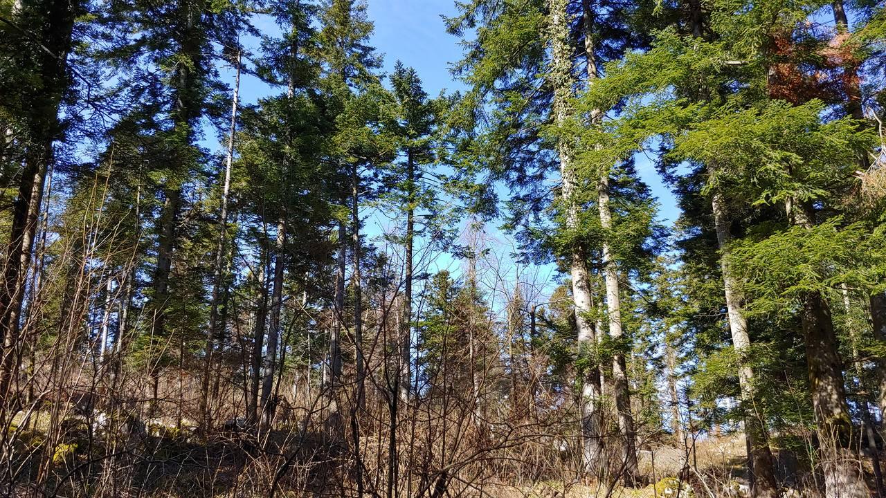 gozd1.jpg