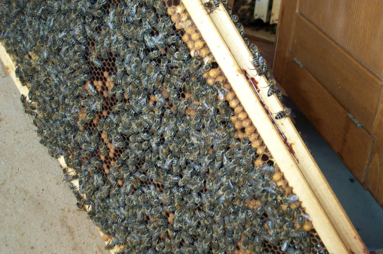 bees6.jpg