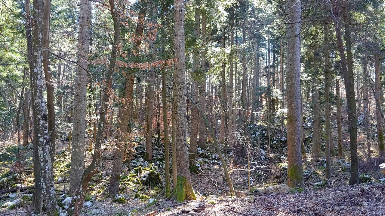 gozd2.jpg