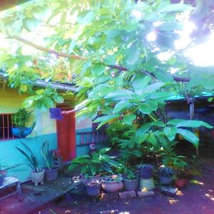 Plantas en macetero