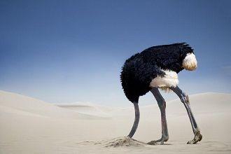 ostrichheadsand.jpg