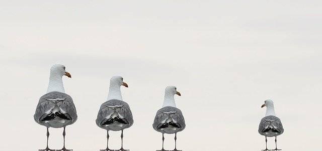 gulls-2662550_640.jpg
