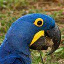 birdwatcher avatar
