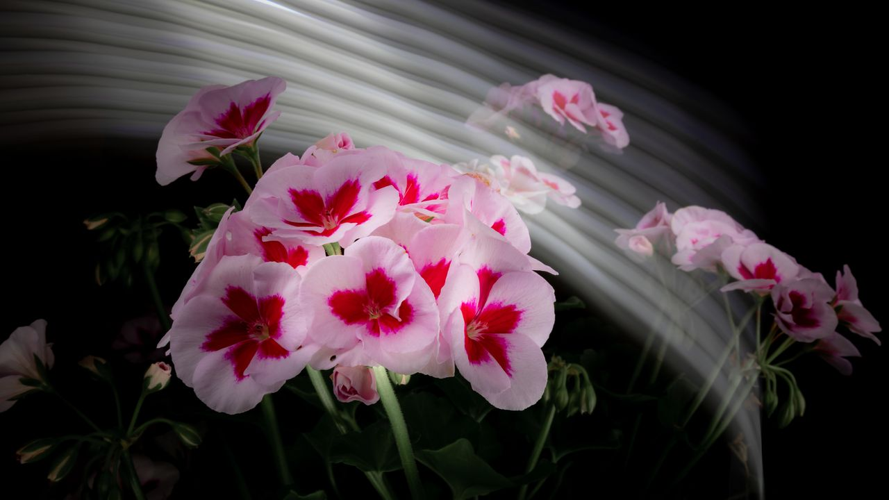 2021_07_17_flowermom_6_lr_2.jpg