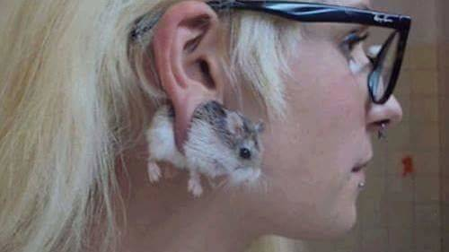 mouse earing.jpg