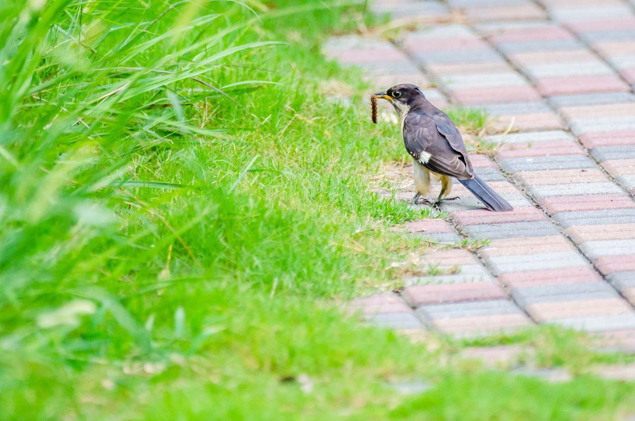 Bird 96.jpg