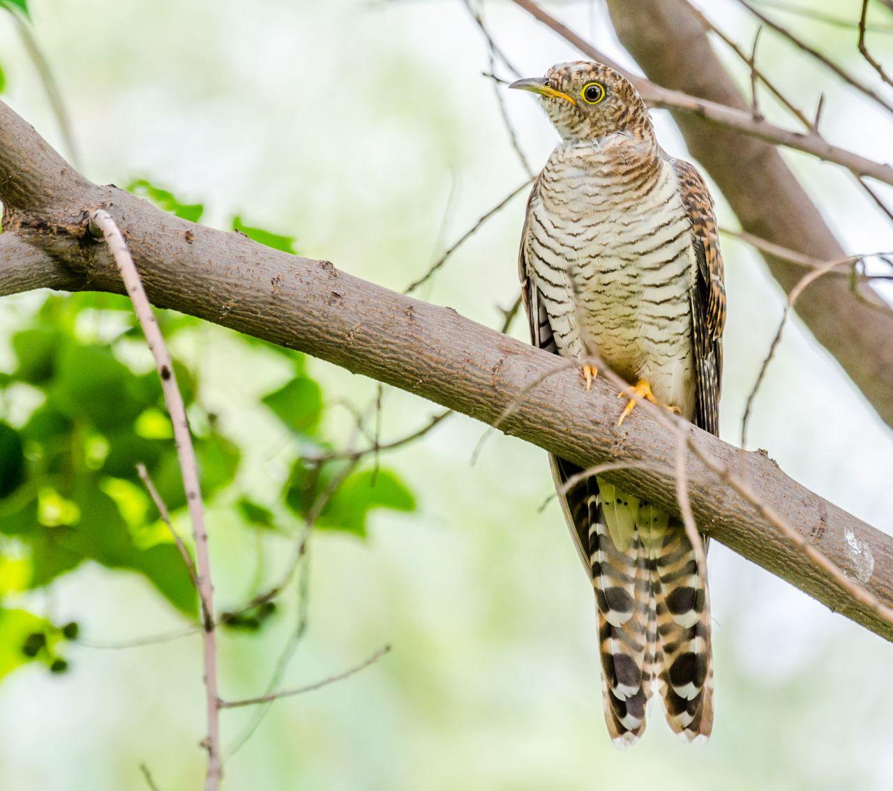 Bird 94.jpg